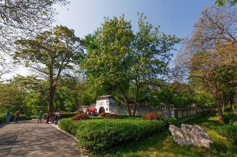 琅琊山风景区摄影大赛春季作品评选在琅管委第一会议室举行,滁州市